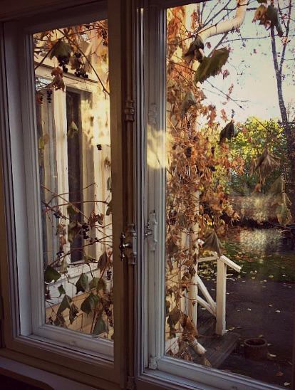Näkymä olohuoneen ikkunasta. Talon seinustalla kasvaa viinirypäleitä.
