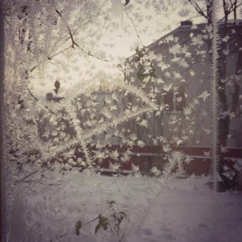 jääkukat keittiön ikkunassa 2